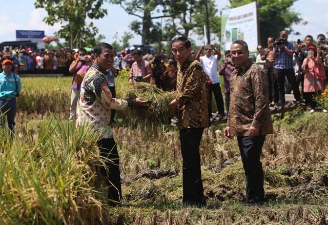 Kinerja Jokowi Urus Pertanian, Masih Tetap Impor Pangan