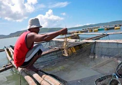 Evaluasi Kebijakan: Nelayan Dan Petani Lobster Bara Api Dalam Sekam